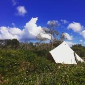 Beach or bush sites